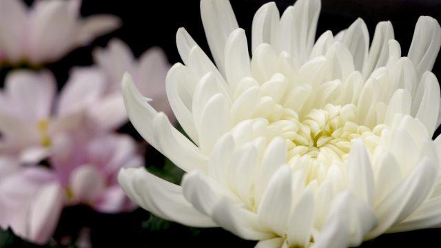 一日葬の供花