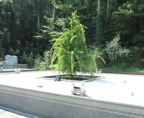 里山浄苑 佛光寺の樹木葬の樹